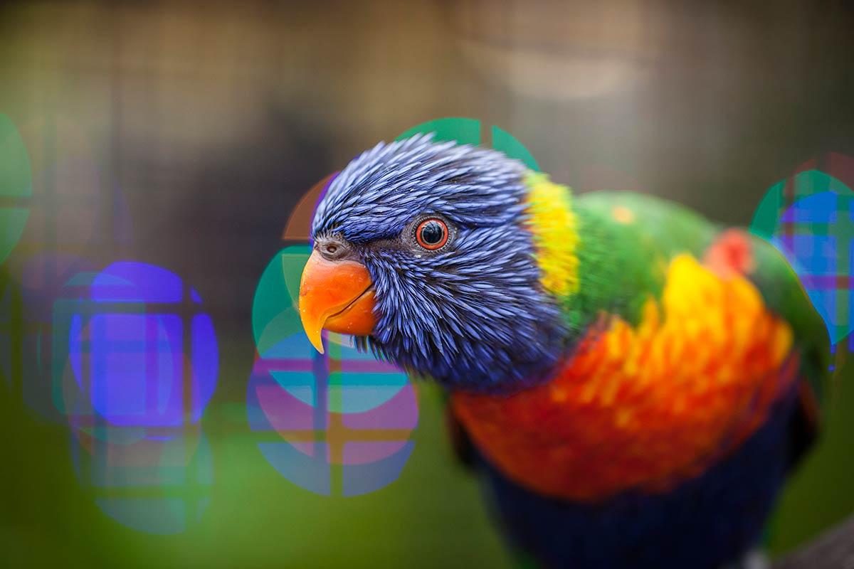Let op kleur in de foto fotocursus hoofddorp - Felle kleuren ...